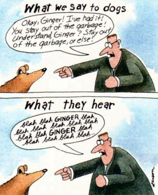 ginger far side